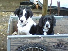 Charlie and Dasher in the barrow