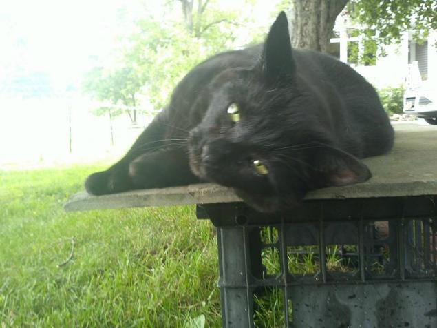 blackie lounging