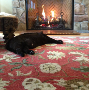 kitteh by the fire